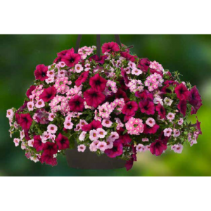 flower basket with light and dark pink flowers