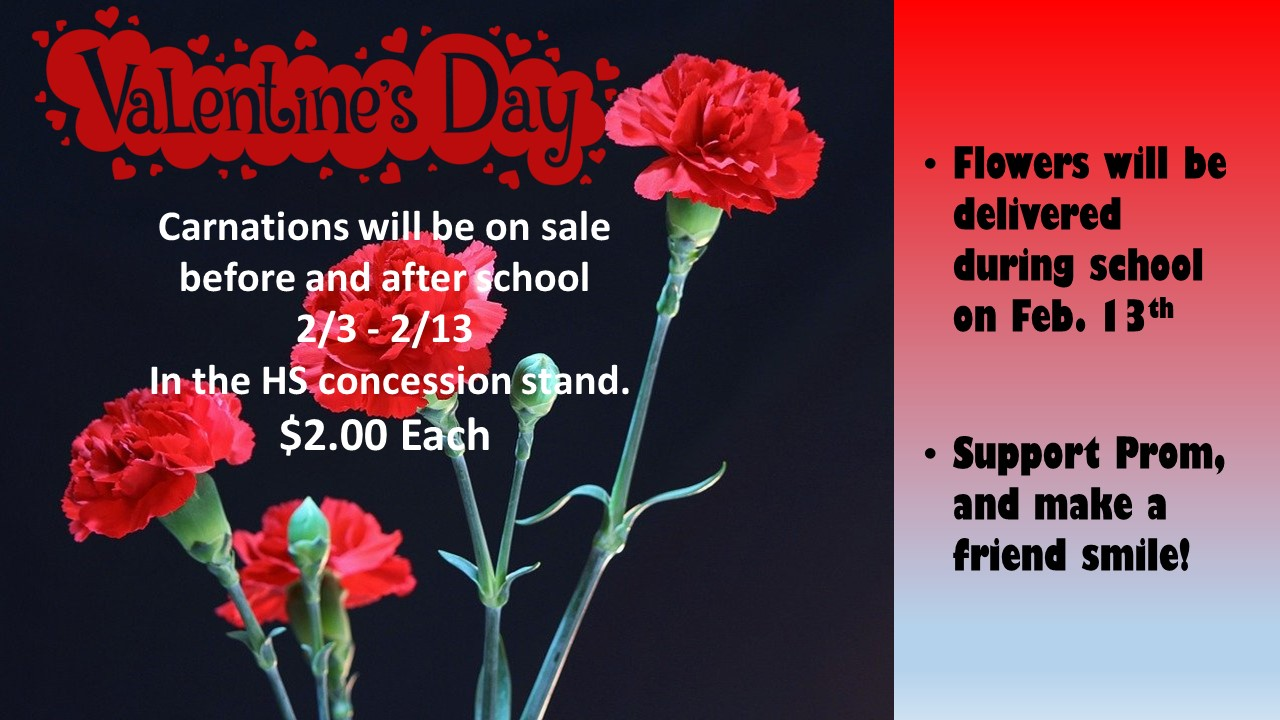 red carnations and valentine's day