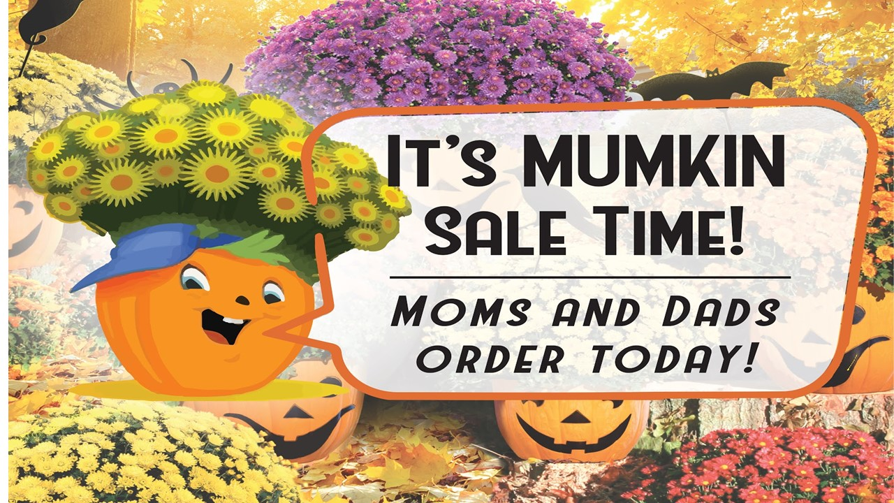 images of mums