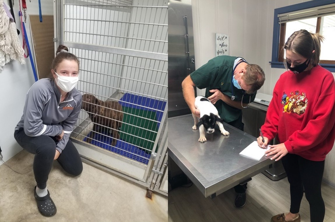 people working at an animal hospital