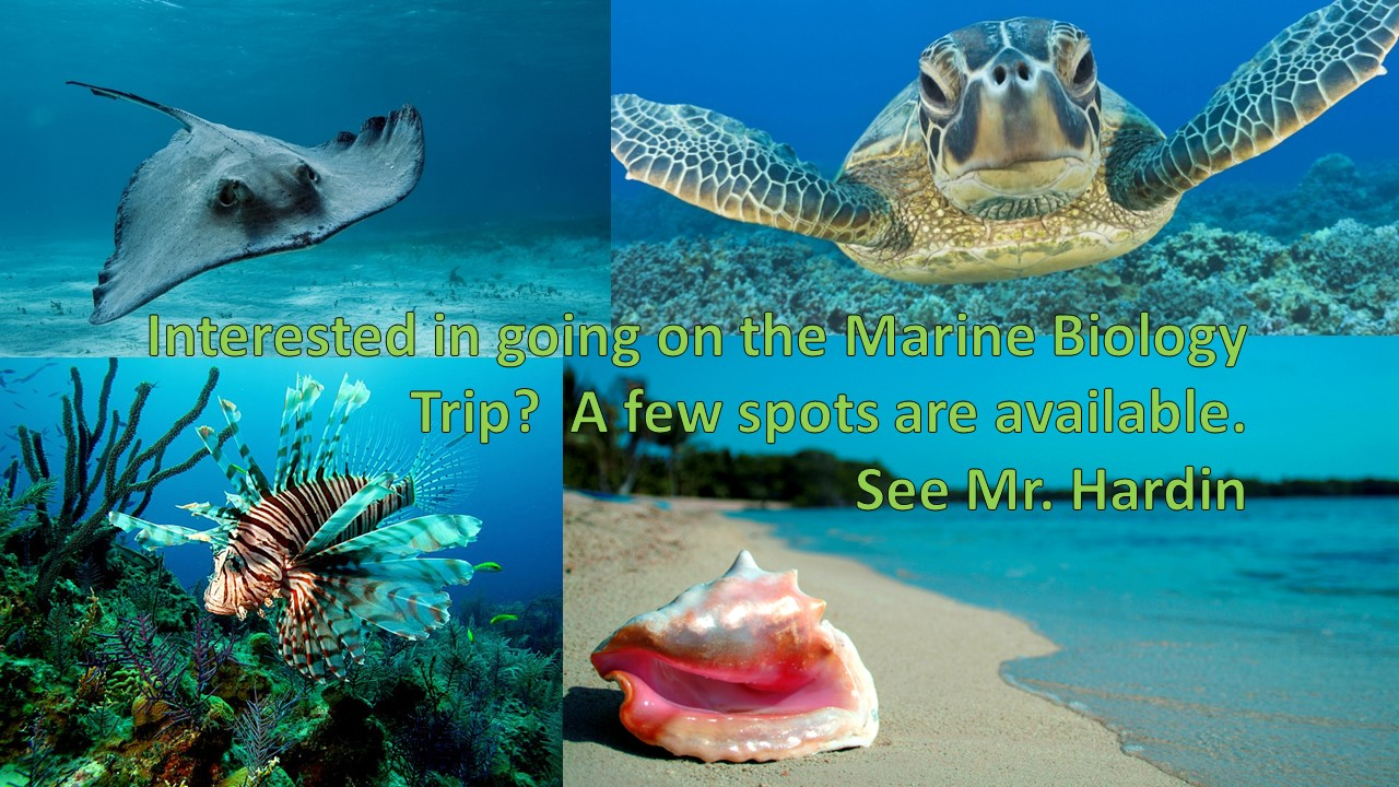 underwater and beach images for the bahamas