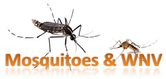 mosquito image and WNV letters
