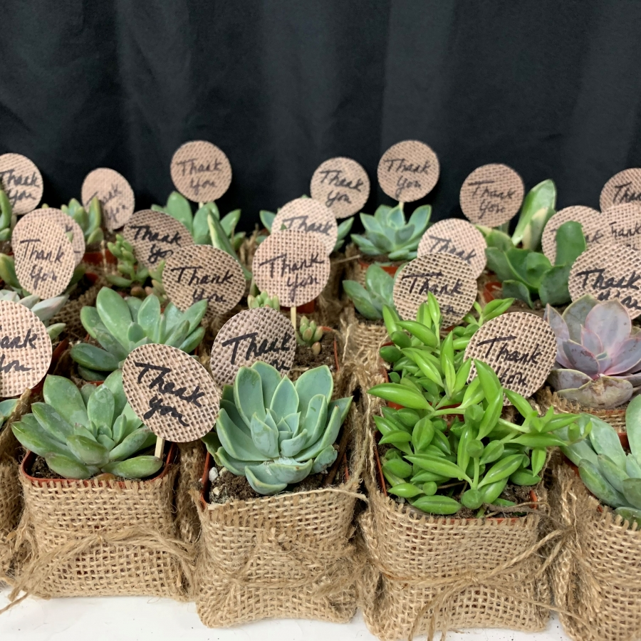 succulents wrapped in burlap
